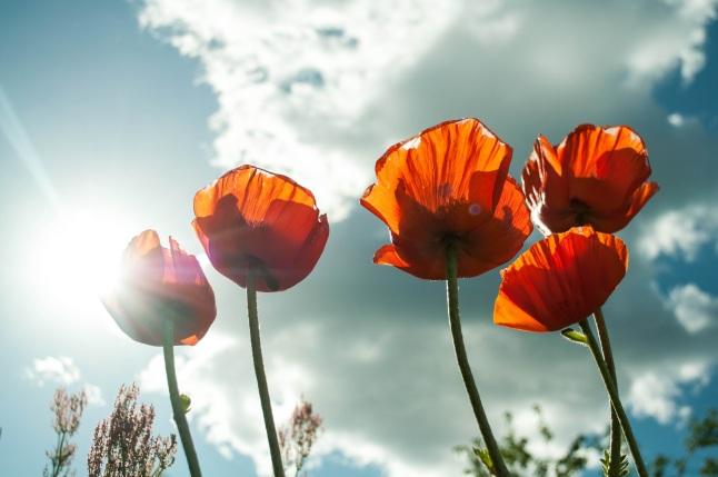 flower-maki-mack-summer-flowers-53013.jpeg