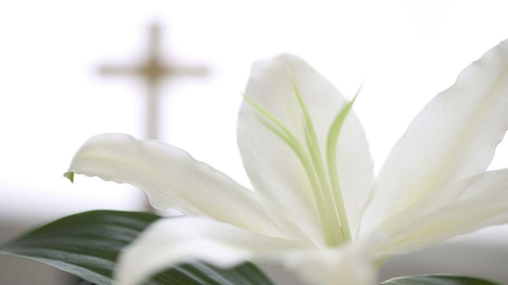 white-lilies-wallpaper